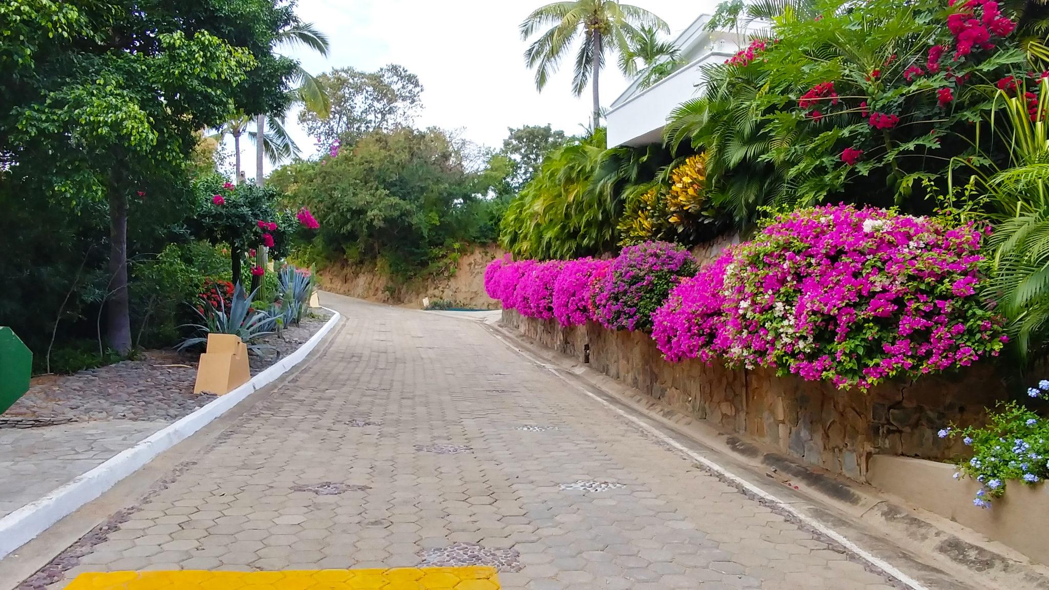roadside_floral